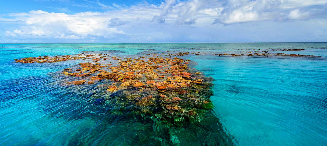 Museum Of Underwater Art And Great Barrier Reef Snorkeling Day Trip