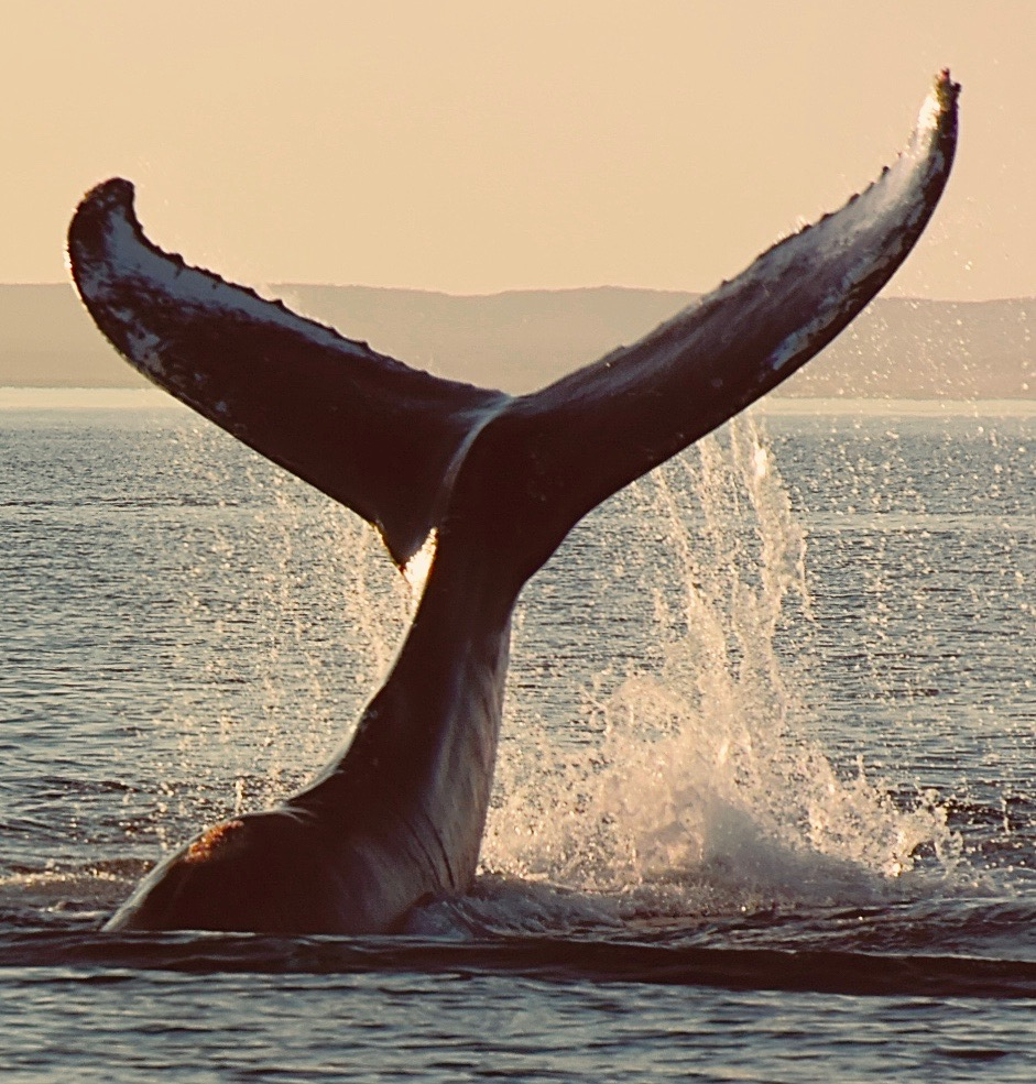 A day with the whale