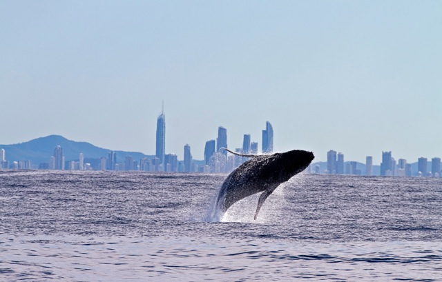 Whale Watching! (Private Boat)